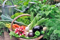 warzywa-mini